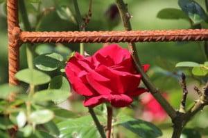 future-outdoors-climbing-rose