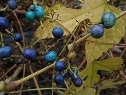future-outdoors-porcelain-berry