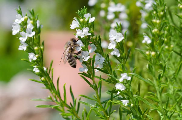 How to Landscape Your Backyard into a Honey Bee Habitat